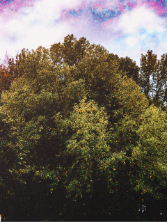 woodland colorful fall2017 changeofseason restful
