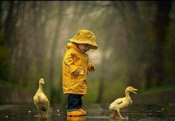 natureza nature patos freetoedit