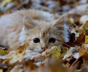 freetoedit nature gato oto fotograf