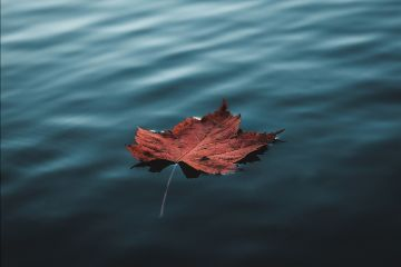 freetoedit leaf nature blue water