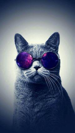 freetoedit cats tumblr wallpaper