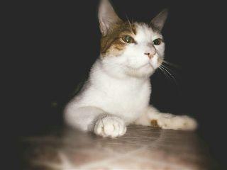 serious freetoedit angrycats