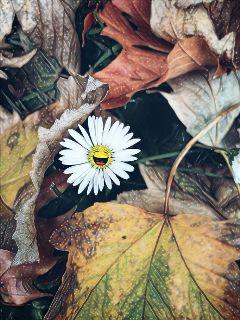 daisy magiceffectgalaxy stickers happiness dodgereffect