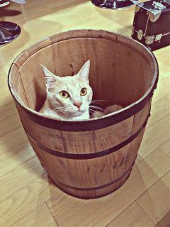 catsofpicsart freetoedit
