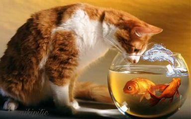 freetoedit fish