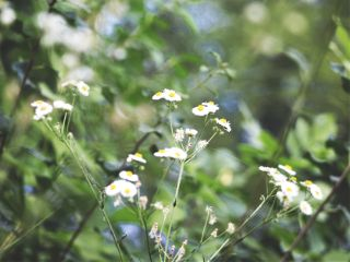 freetoedit closeup flowers green nature