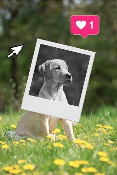 freetoedit polaroid picture frame bnw