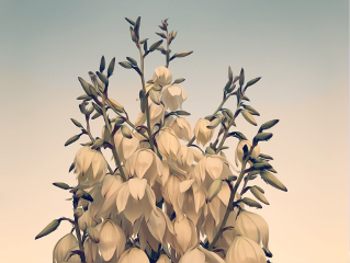 nature wildplantsandtheirflowers cactustree naturesbeauty softsunsetlight