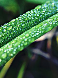 plant plants pflanze pflanzen water