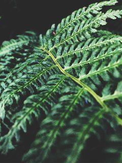 farn plant plants pflanze pflanzen