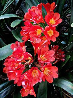 flowerphotography  myphoto