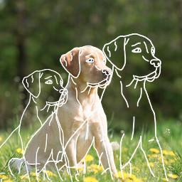 freetoedit dog pets animal puppy beautiful cute beauty love interesting art photography summer