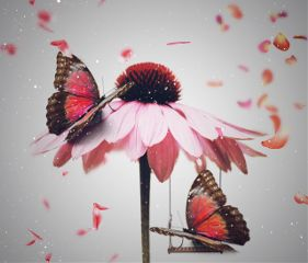 freetoedit flower swing butterfly petals