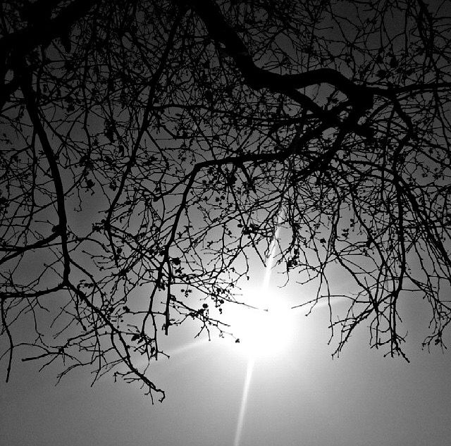 #sky #photography #nature #tree #blackandwhite