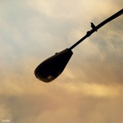 streetlamp sunset silhouette bird freetoedit