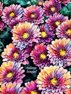freetoedit flowersatthefarmersmarket bensalempa mondayafternoon