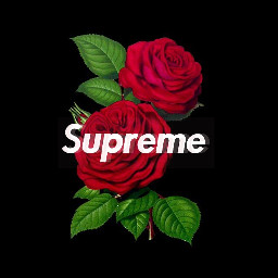 supreme rose wallpaper iphone