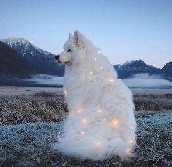 freetoedit dog haski
