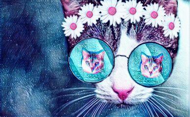 mexico ensenadabc cat gato freetoedit