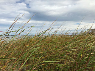 freetoedit beach grass nature