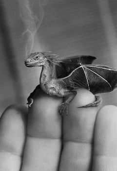 freetoedit blackandwhite hand fingers dragon