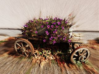 old wagon flowers zoomblureffect