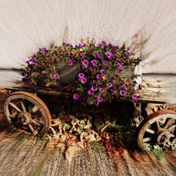 old wagon flowers zoomblureffect