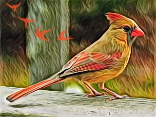 freetoedit picsart nature cardinal highlightmagiceffect