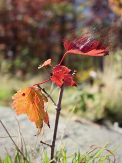 dispersiontool motionblur erasetool leaves autumn freetoedit