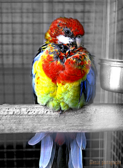 parrot petsandanimals colorful blackandwhite zoo