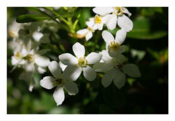 landscape flower shadow macro macrophotography