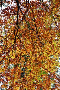 photography nature macro emotion autumn