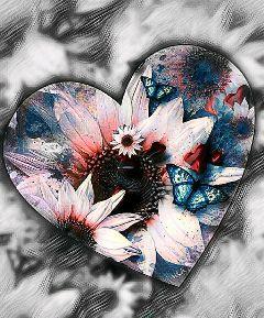 blackandwhite colorsplash heart flower butterflies