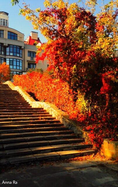 #freetoedit #myphotography #photography #photo #artphotography #streetphotography #picsart #autumnart #nature #remixit #remixed