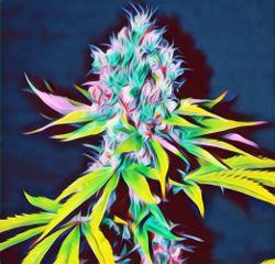 freetoedit trippy weed mariuhana