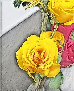 freetoedit flower rose roses