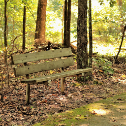bench outdoors nature freetoedit
