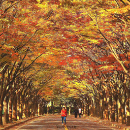 park southkorea autumn nature beautiful
