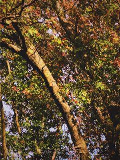 woodland natureportrait lowangleview sunny portraitsofcolor