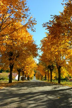 freetoedit travel nature fall autumn