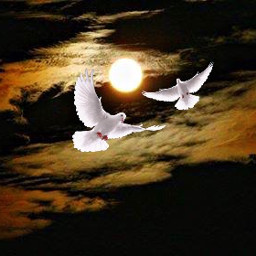 freetoedit reedited remixedgallery moon doves