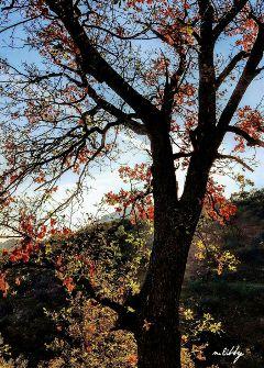 autumn fall sun tree leaves