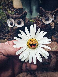 magiceffectgalaxy dodgereffect daisy flower stickers