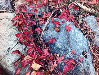 freetoedit nature autumn background