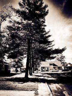 portrait natureportrait pinetree side monochrome