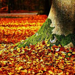 publicdomainimage artisticedit fall orange leaves