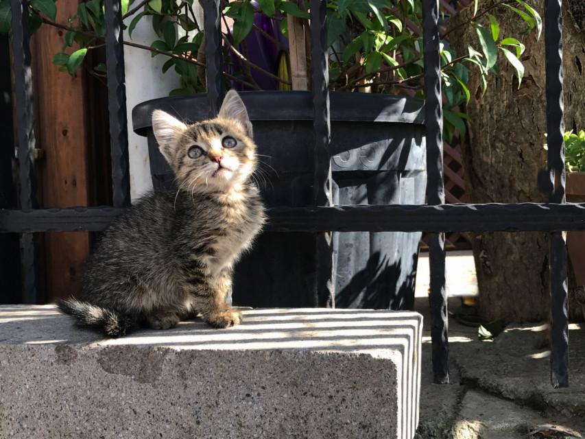 #freetoedit  #Caturday! 💚 #kitten #kedi #catsofpicsart #catsofistanbul