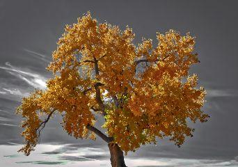 angeleyesimages landscape landscapephotomagazine landscapephotography tree