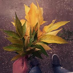 freetoedit autumnswag autumn leaves leavesfall