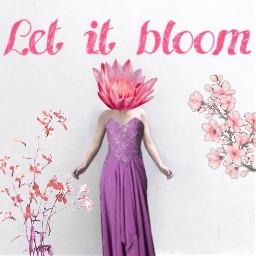 letitbloom flowers freetoedit